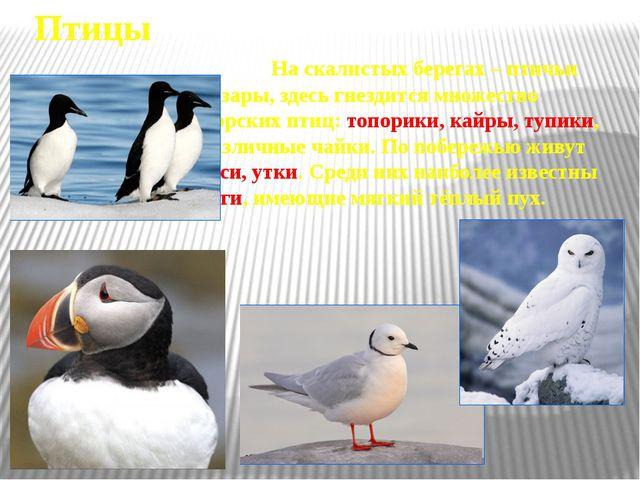 Экология Человек Арктике нанес большой ущерб. Стали редкими такие животные, к...