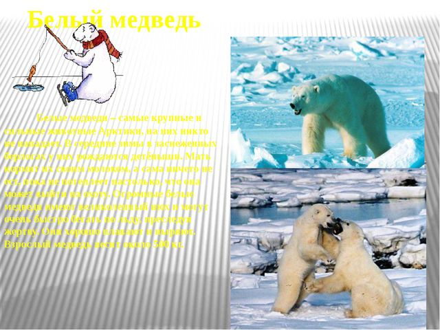 Тюлень Тюлени живут как в Арктике, так и в Антарктике. Тюленям не дает замёрз...