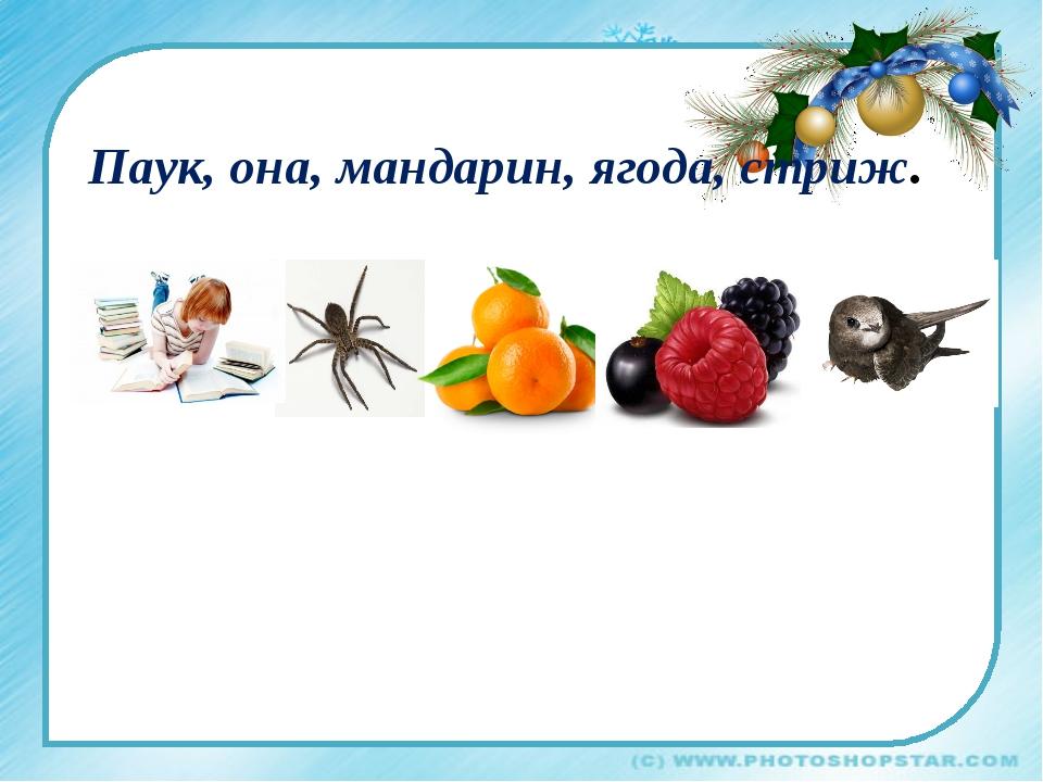 Паук, она, мандарин, ягода, стриж.