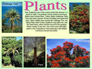 New Zealand is one of the world's richest bio-diverse flora areas on earth.