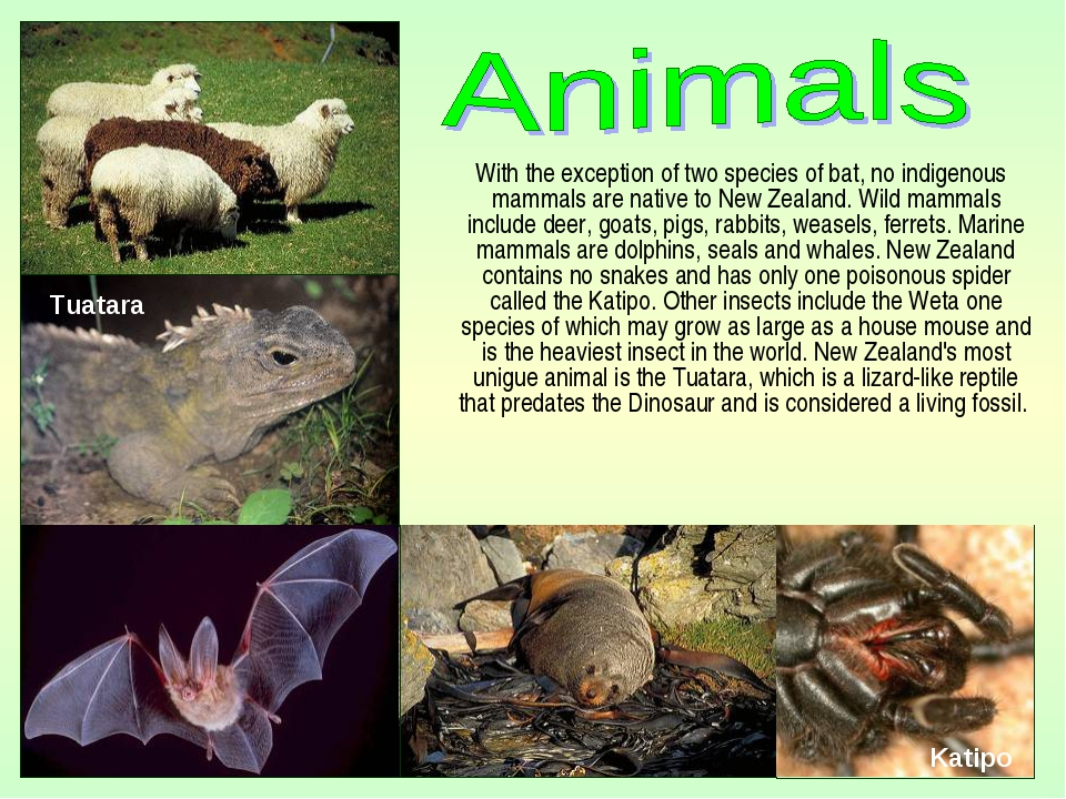 With the exception of two species of bat, no indigenous mammals are native t...