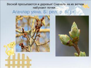 Весной просыпаются и деревья! Сначала на их ветках набухают почки… Агачлар уя