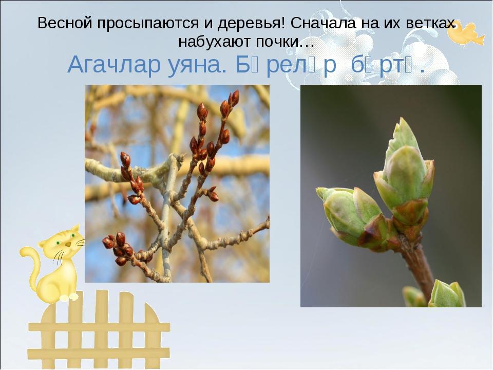 Весной просыпаются и деревья! Сначала на их ветках набухают почки… Агачлар уя...