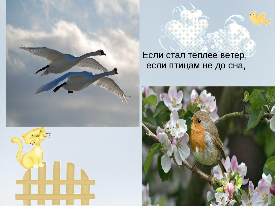 Если стал теплее ветер, если птицам не до сна,
