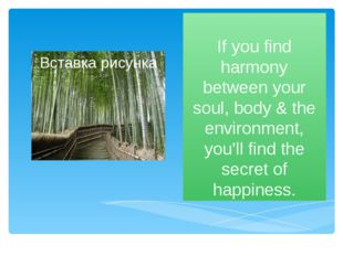 If you find harmony between your soul, body & the environment, you'll find th