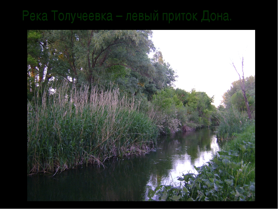Река Толучеевка – левый приток Дона.