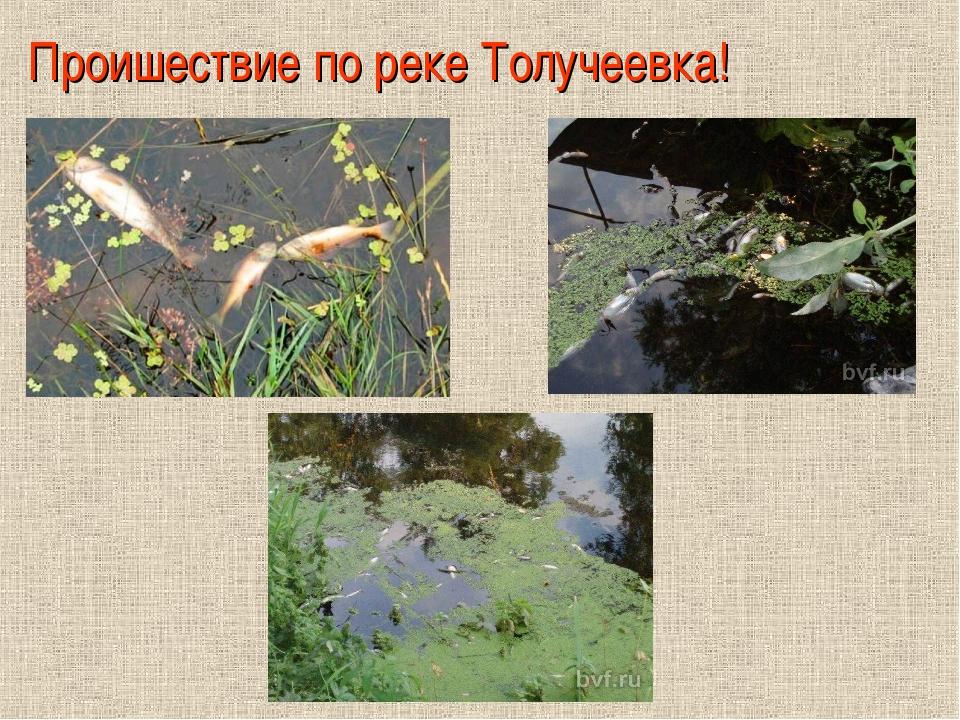 Проишествие по реке Толучеевка!
