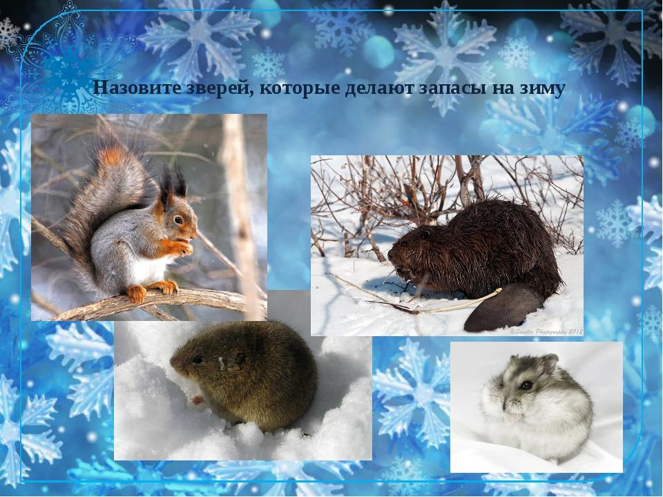 Назовите зверей, которые делают запасы на зиму