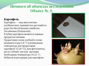 Немного об объектах исследования Объект № 3: Картофель Картофель— вид многол