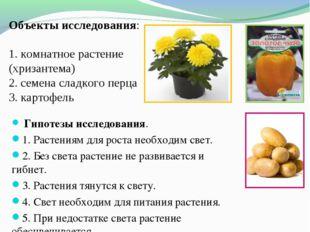 Объекты исследования: 1. комнатное растение (хризантема) 2. семена сладкого
