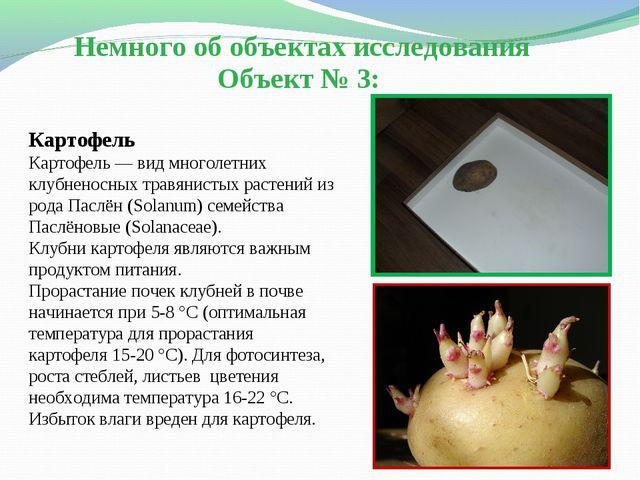 Немного об объектах исследования Объект № 3: Картофель Картофель— вид многол...