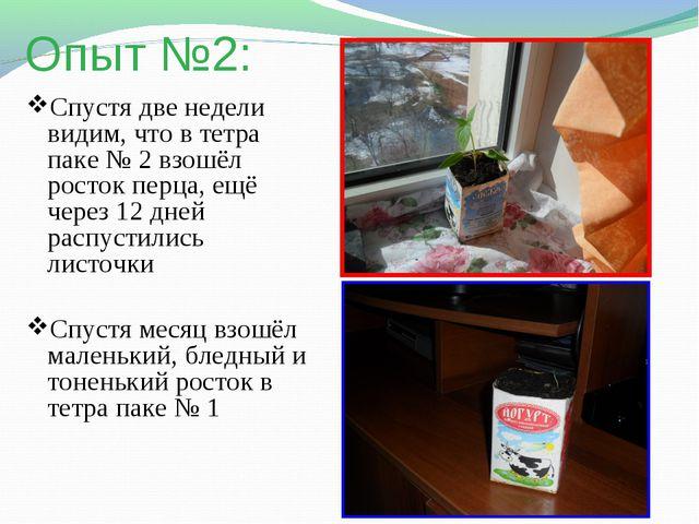 Опыт №2: Спустя две недели видим, что в тетра паке № 2 взошёл росток перца, е...
