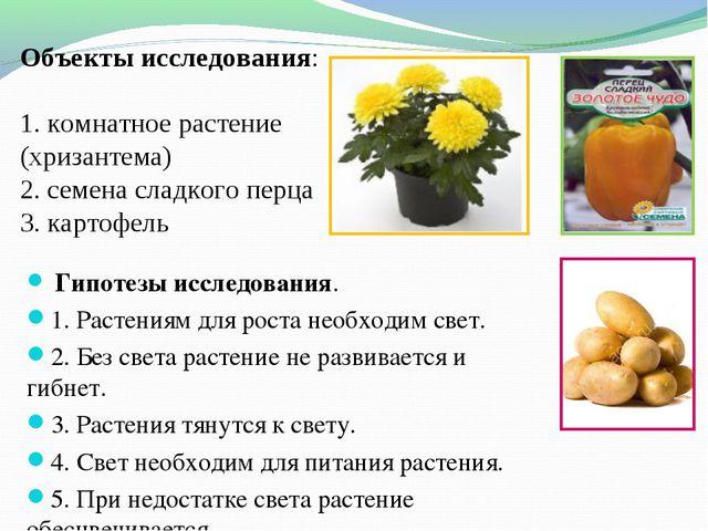 Объекты исследования: 1. комнатное растение (хризантема) 2. семена сладкого...