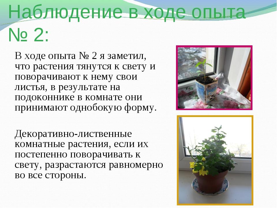 Наблюдение в ходе опыта № 2: В ходе опыта № 2 я заметил, что растения тянутся...