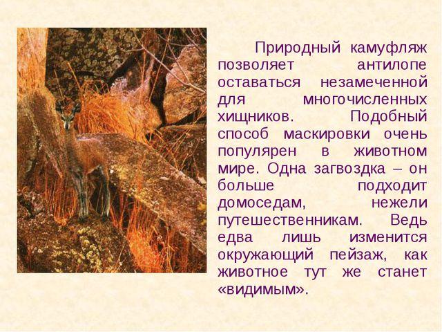 Природный камуфляж позволяет антилопе оставаться незамеченной для многочисле...