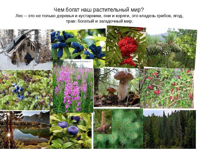 Чем богат наш растительный мир? Лес – это не только деревья и кустарники, пни...