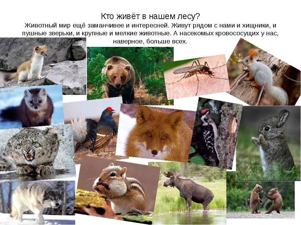 Кто живёт в нашем лесу? Животный мир ещё заманчивее и интересней. Живут рядом...