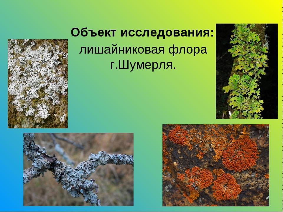 Объект исследования: лишайниковая флора г.Шумерля.