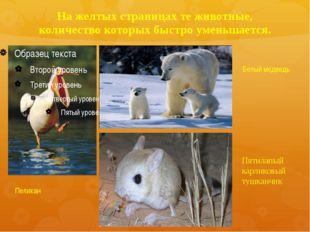 На желтых страницах те животные, количество которых быстро уменьшается. Пелик