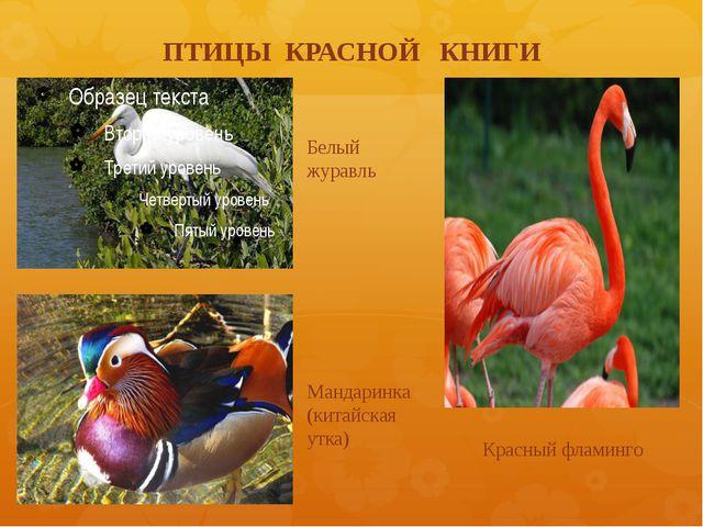 ПТИЦЫ КРАСНОЙ КНИГИ Белый журавль Мандаринка (китайская утка) Красный фламинго