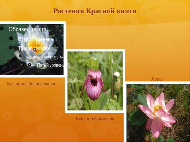 Растения Красной книги Кувшинка белоснежная Венерин башмачок Лотос