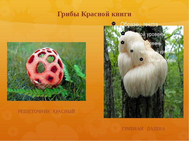 Грибы Красной книги РЕШЕТОЧНИК КРАСНЫЙ ГРИБНАЯ ЛАПША