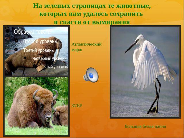 На зеленых страницах те животные, которых нам удалось сохранить и спасти от в...