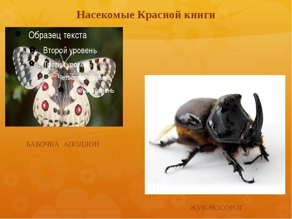 Насекомые Красной книги БАБОЧКА АПОЛЛОН ЖУК-НОСОРОГ