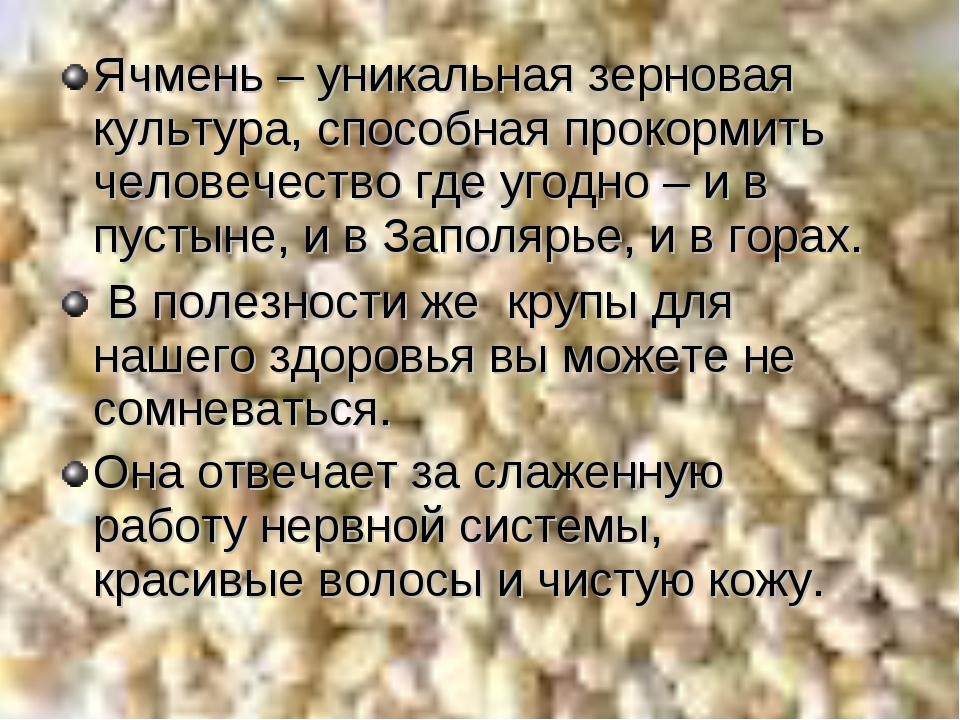 Ячмень – уникальная зерновая культура, способная прокормить человечество где...