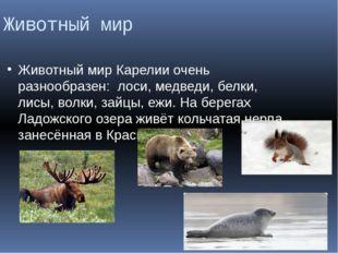 Животный мир Животный мир Карелии очень разнообразен: лоси, медведи, белки, л