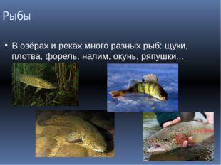 Рыбы В озёрах и реках много разных рыб: щуки, плотва, форель, налим, окунь, р