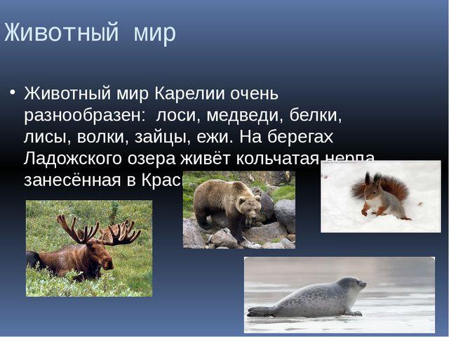 Животный мир Животный мир Карелии очень разнообразен: лоси, медведи, белки, л...