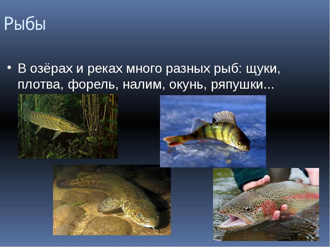 Рыбы В озёрах и реках много разных рыб: щуки, плотва, форель, налим, окунь, р...