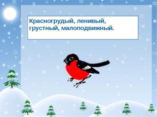 Красногрудый, ленивый, грустный, малоподвижный.