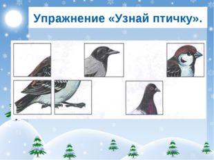 Упражнение «Узнай птичку».