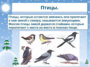 Птицы. Птицы, которые остаются зимовать или прилетают к нам зимой с севера, н