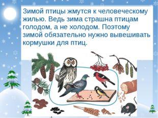 Зимой птицы жмутся к человеческому жилью. Ведь зима страшна птицам голодом, а