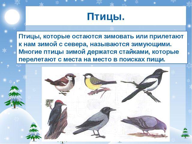 Птицы. Птицы, которые остаются зимовать или прилетают к нам зимой с севера, н...