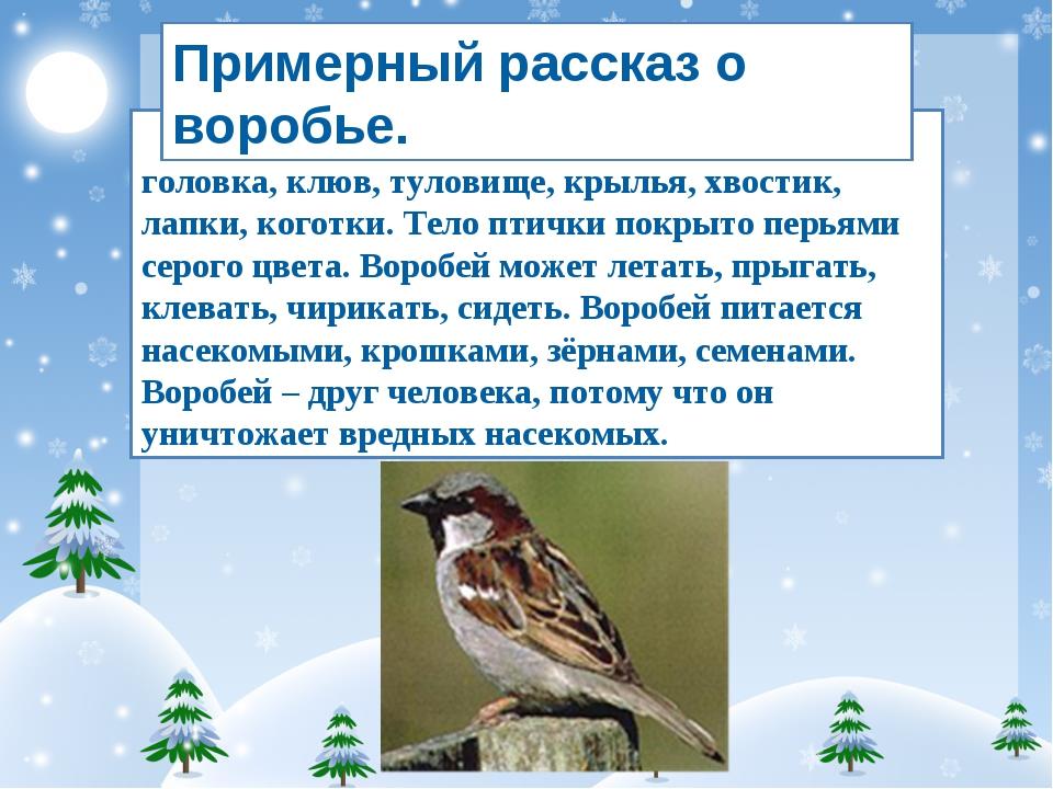 Воробей – зимующая птица. У него есть головка, клюв, туловище, крылья, хвости...