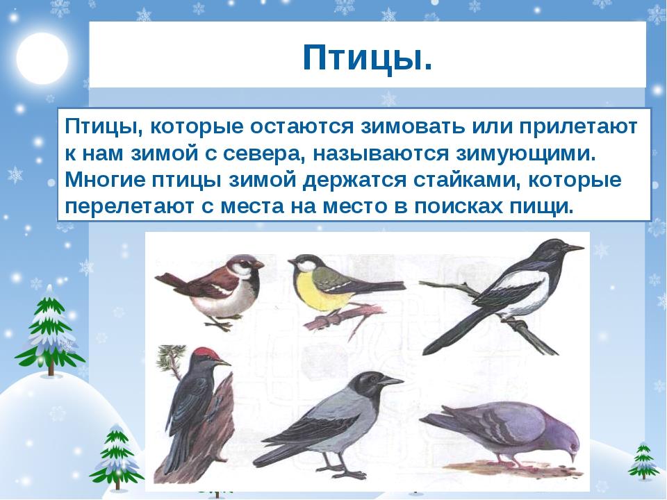 Раскраска ворона Распечатать картинки бесплатно