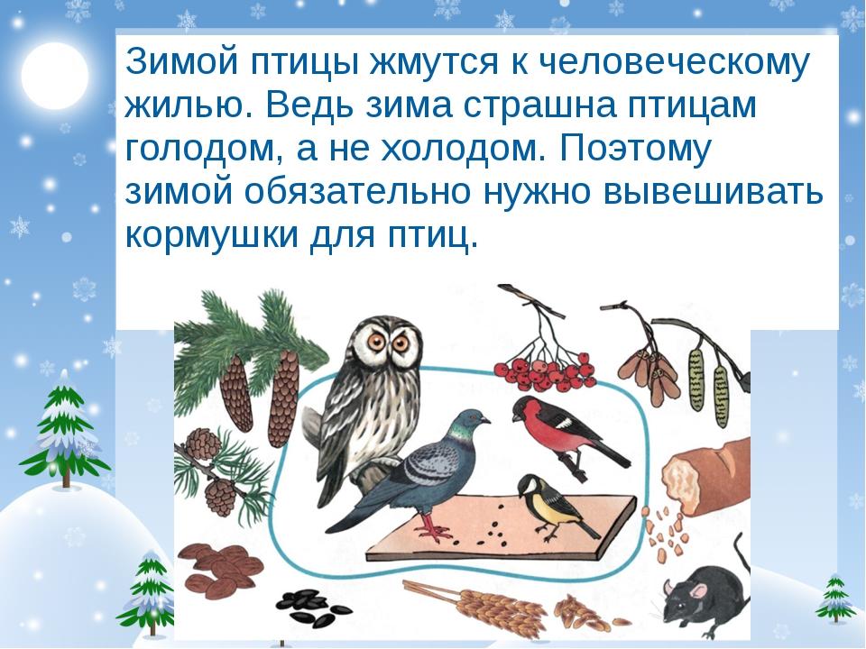 Зимой птицы жмутся к человеческому жилью. Ведь зима страшна птицам голодом, а...
