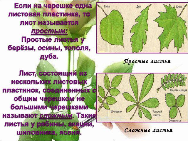 Простые листья Сложные листья
