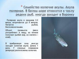 Полярная акула в среднем 2-3 метра, встречаются до 8 метров. Питается рыбой