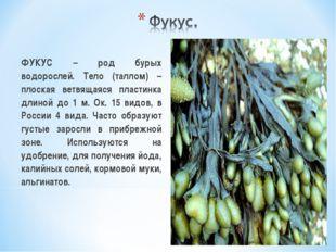 ФУКУС – род бурых водорослей. Тело (таллом) – плоская ветвящаяся пластинка д