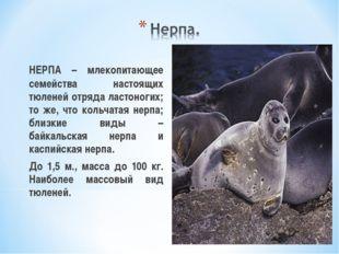 НЕРПА – млекопитающее семейства настоящих тюленей отряда ластоногих; то же,