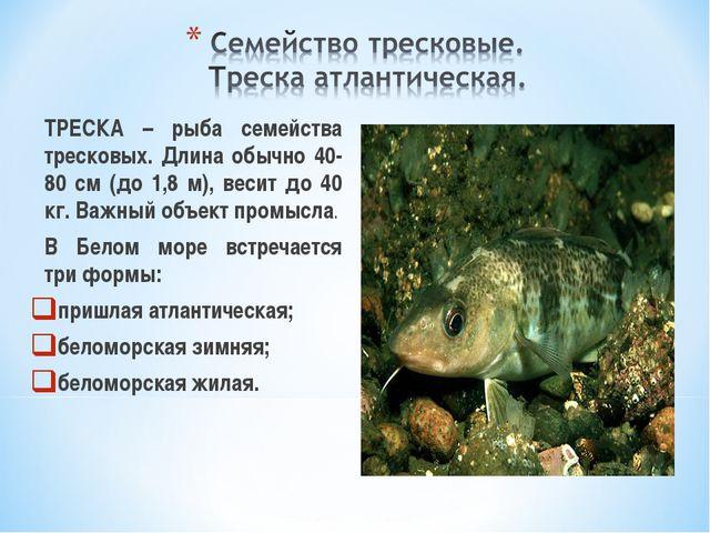 ТРЕСКА – рыба семейства тресковых. Длина обычно 40-80 см (до 1,8 м), весит д...