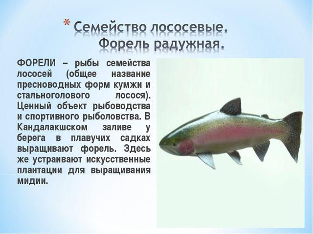ФОРЕЛИ – рыбы семейства лососей (общее название пресноводных форм кумжи и ст...