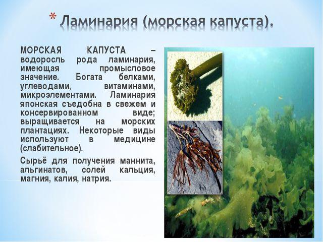 МОРСКАЯ КАПУСТА – водоросль рода ламинария, имеющая промысловое значение. Бо...
