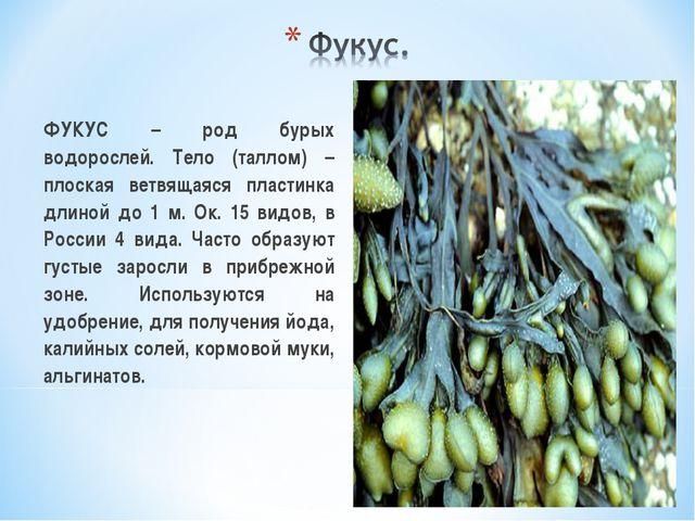 ФУКУС – род бурых водорослей. Тело (таллом) – плоская ветвящаяся пластинка д...