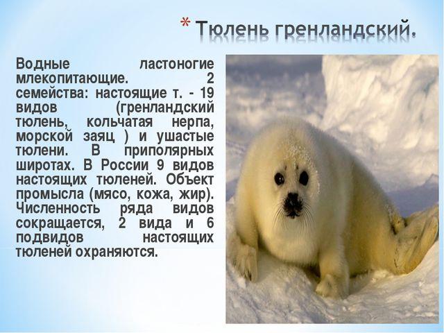 Водные ластоногие млекопитающие. 2 семейства: настоящие т. - 19 видов (гренл...